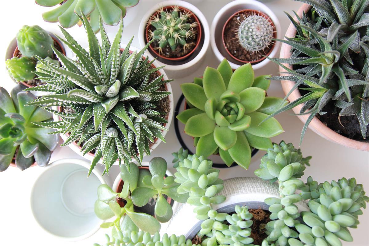 How houseplants can help win over buyers in Wokingham